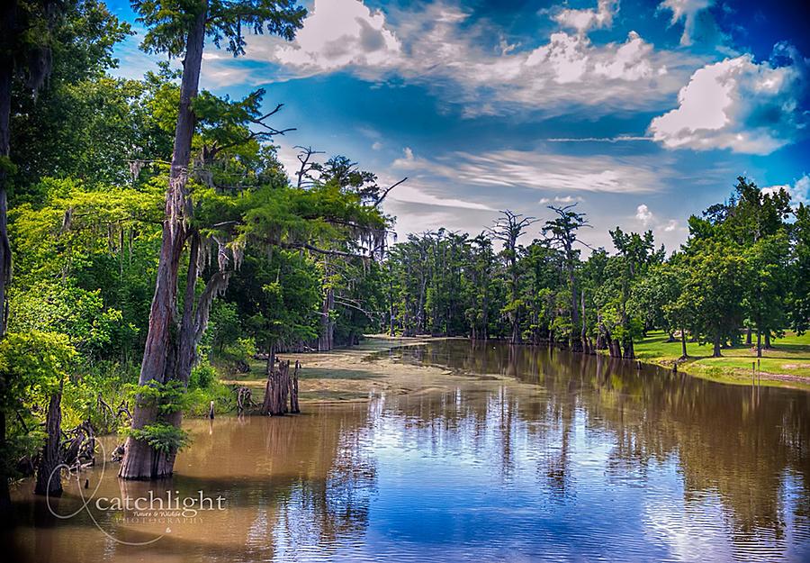 Louisiana Swamp Photograph by Tammy Smith