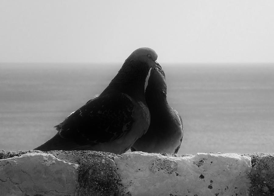 Landscape Photograph - Love Birds by Michelle ONeill