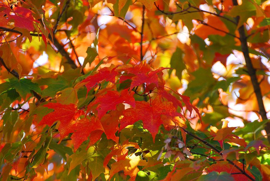 Fall Photograph - Love Fall by Lorena Mahoney