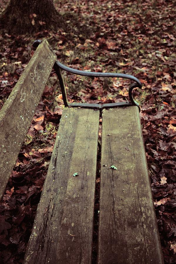 Bench Photograph - Love In B Minor by Odd Jeppesen