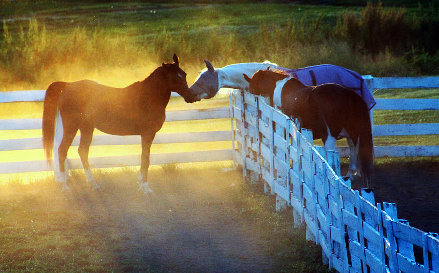 Horses Photograph - Love In Kentucky by Lily K