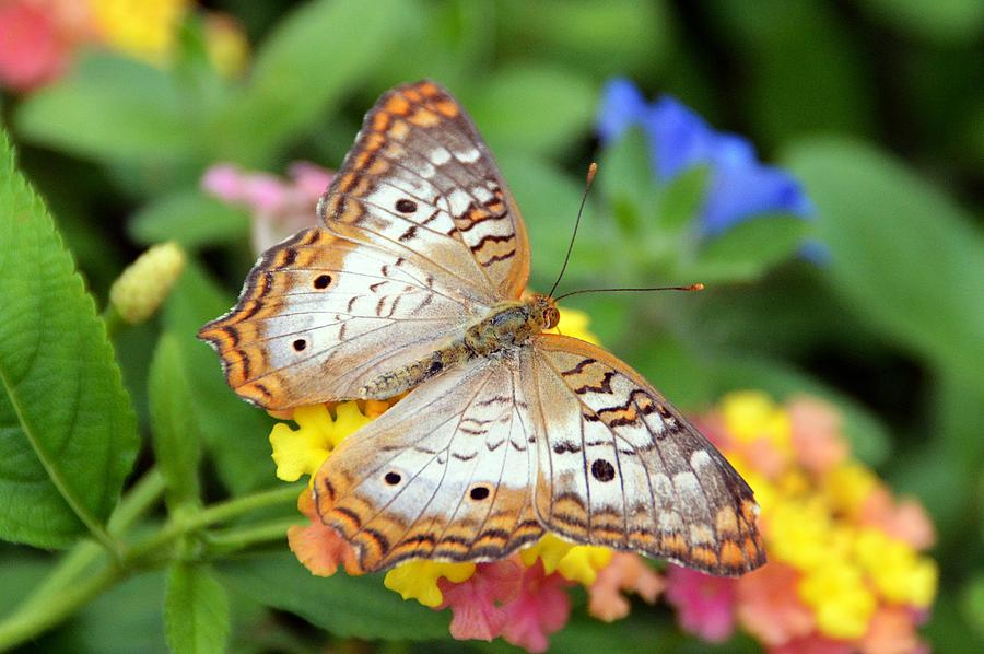Butterfly Photograph - Love in Nature by David Earl Johnson