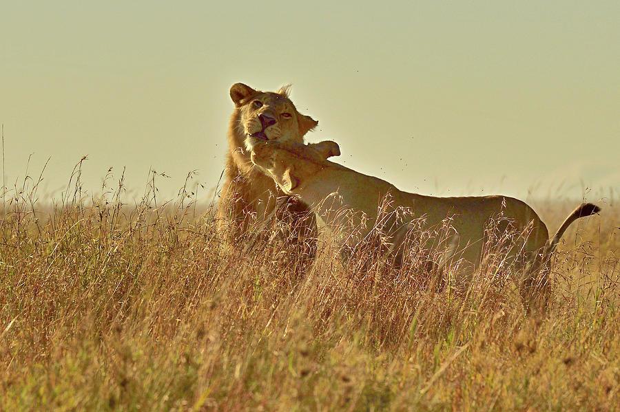 Love In Serengiti Photograph by Safique Hazarika Photography