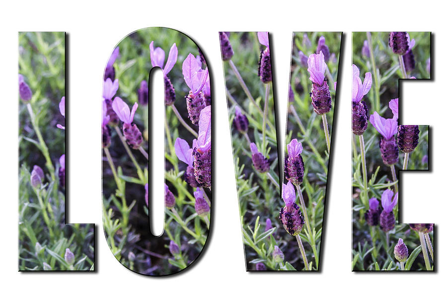 Love in Spanish Lavender on White from the Faith Hope and Love Series by Karen Stephenson