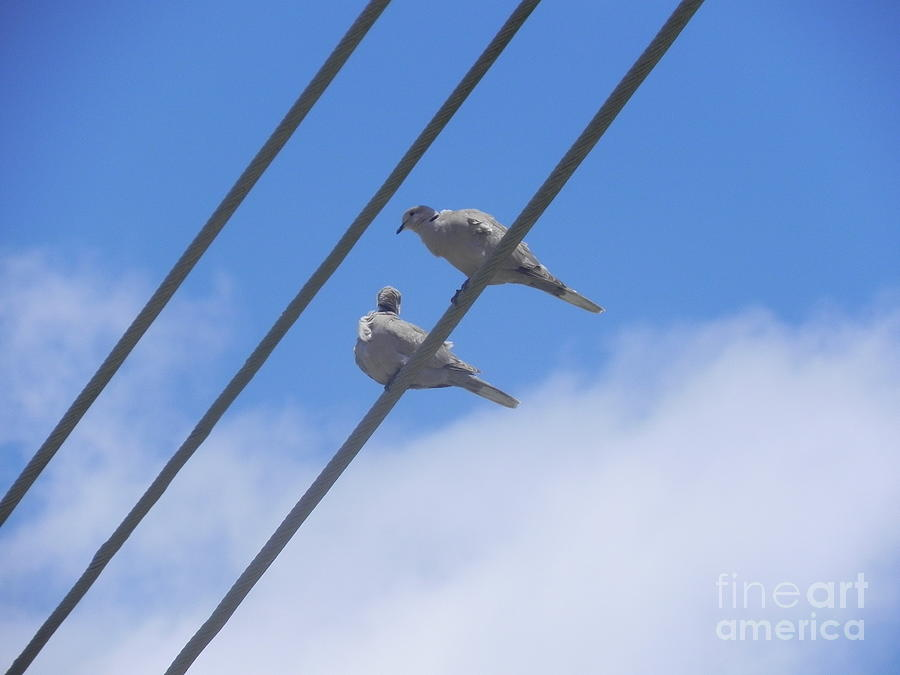 Birds Photograph - Love Is In The Air by Chrisann Ellis