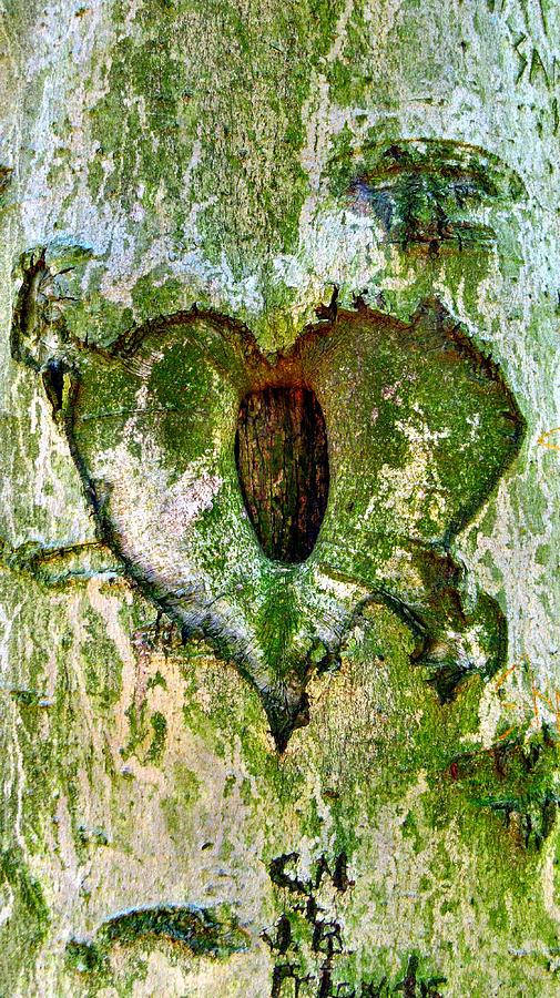 Elder Photograph - Love Is by Art Dingo