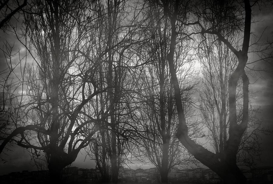 Trees Photograph - Love Is Odd by Taylan Apukovska
