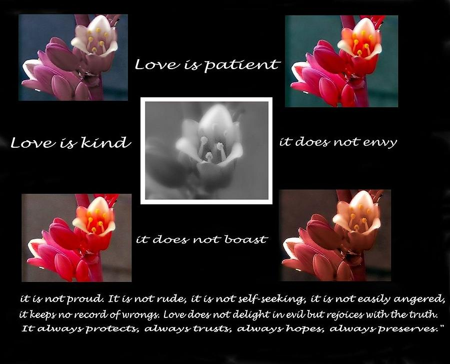 Love Photograph - Love Is Patient by Ruth Jolly