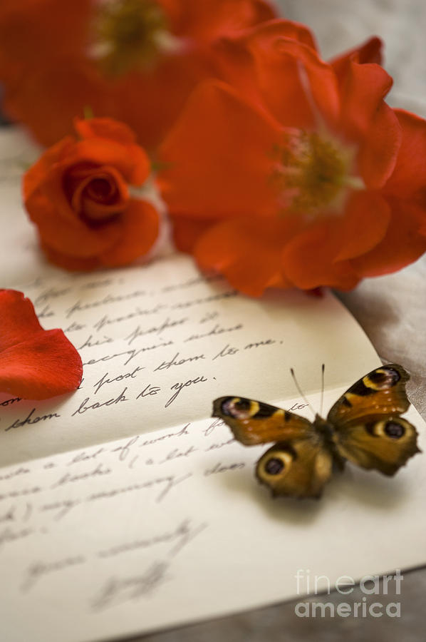rose photograph love letter with roses and butterfly by lee avison