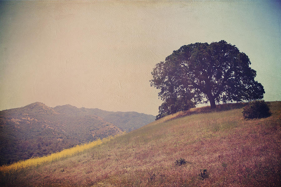 Mt. Diablo State Park Photograph - Love Lifts Us Up by Laurie Search