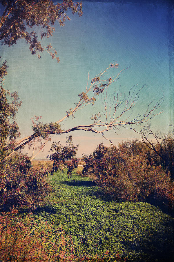 Big Break Regional Shoreline Park Photograph - Love Lives On by Laurie Search
