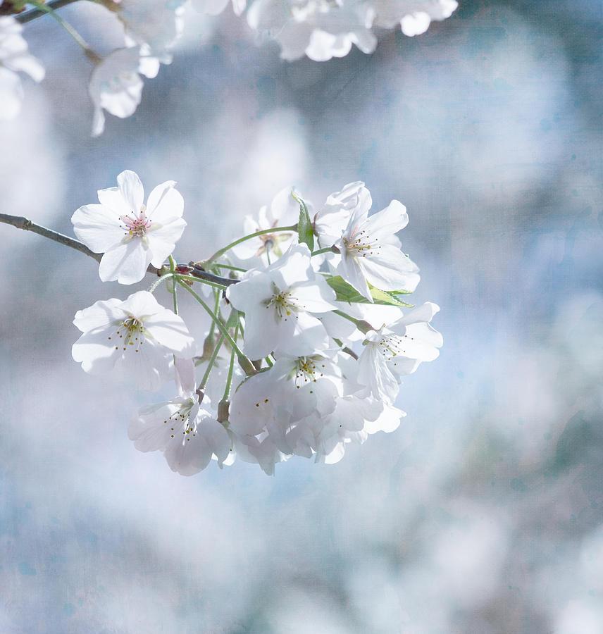 Flower Photograph - Love Must Be by Kim Hojnacki