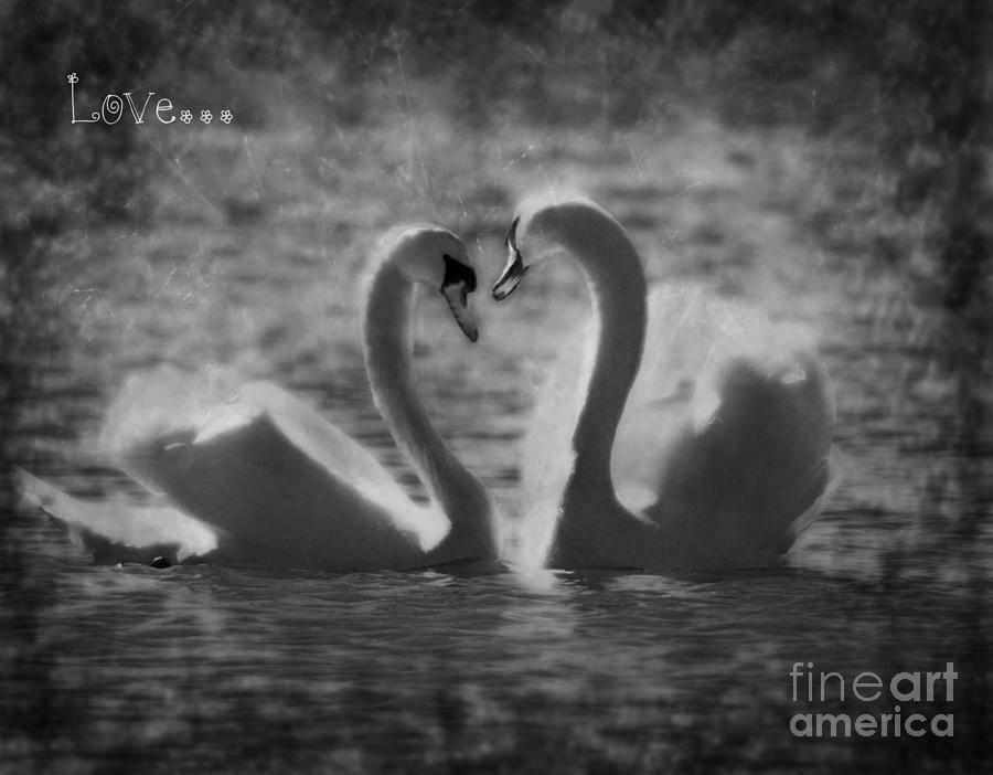 Valentine Photograph - Love... by Nina Stavlund
