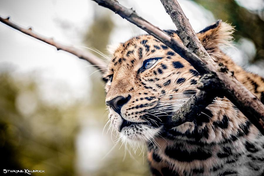Coronavirus Photograph - Love panther IV by Stwayne Keubrick
