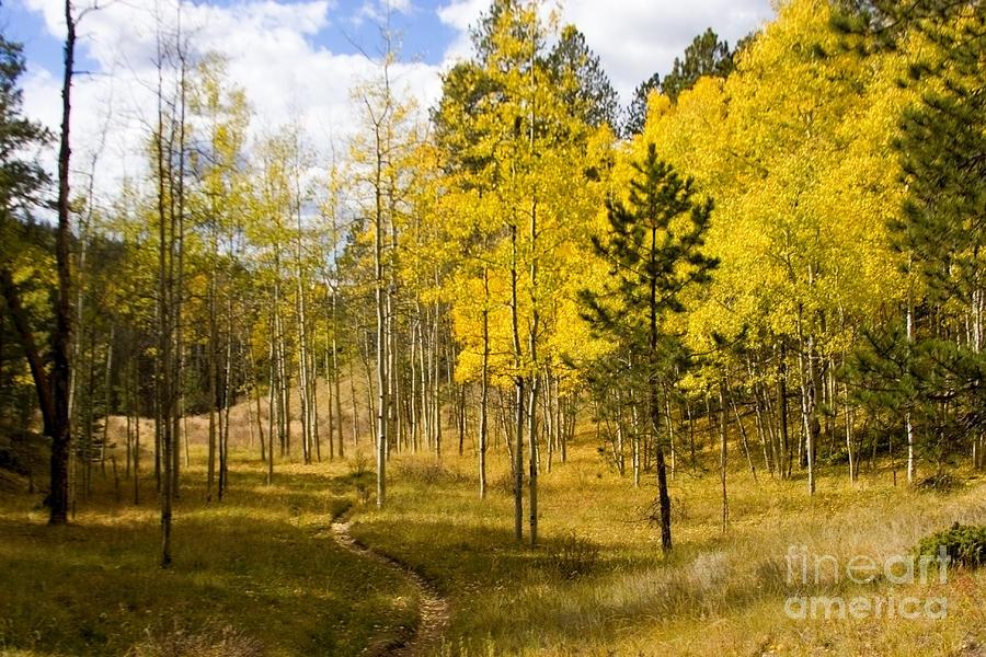 Lovel Gulch Trail Photograph