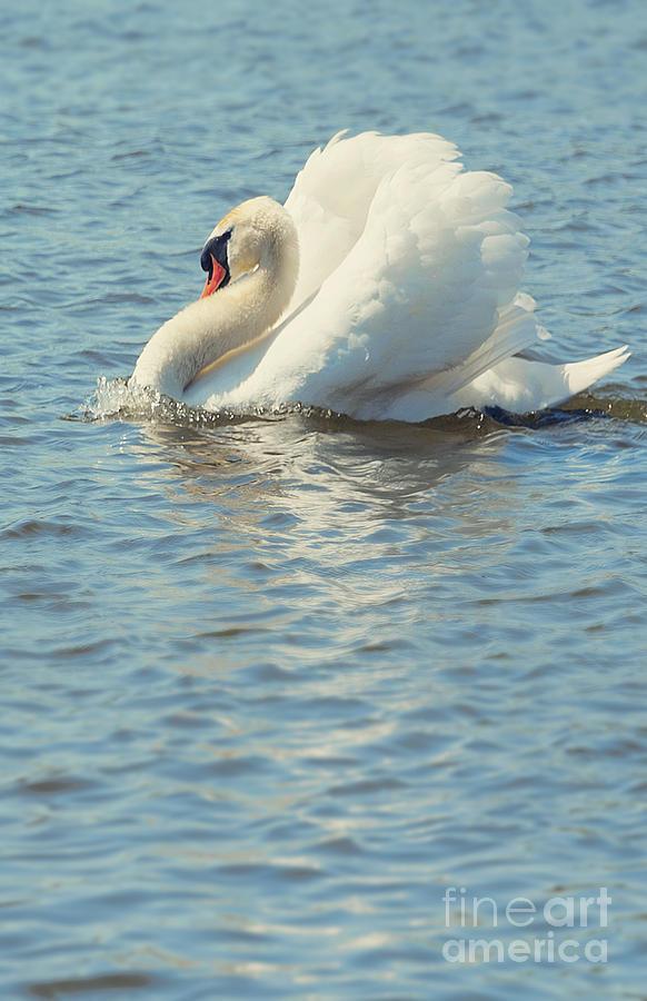Bay Photograph - Lovely Bird by Svetlana Sewell