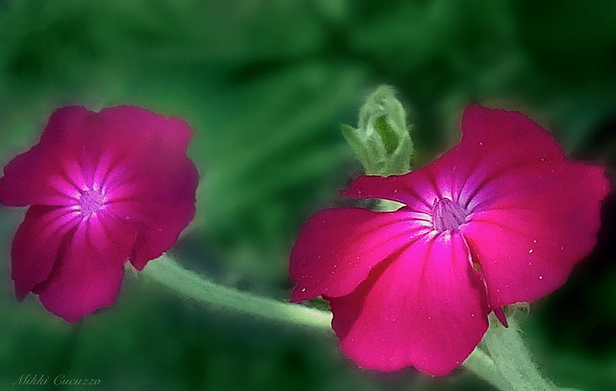 Floral Photograph - Lovely Flowers by Mikki Cucuzzo