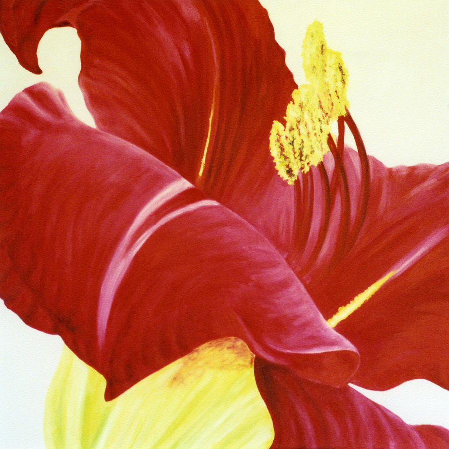 Red Painting - Lovely Lily Floral Print by Diane Jorstad