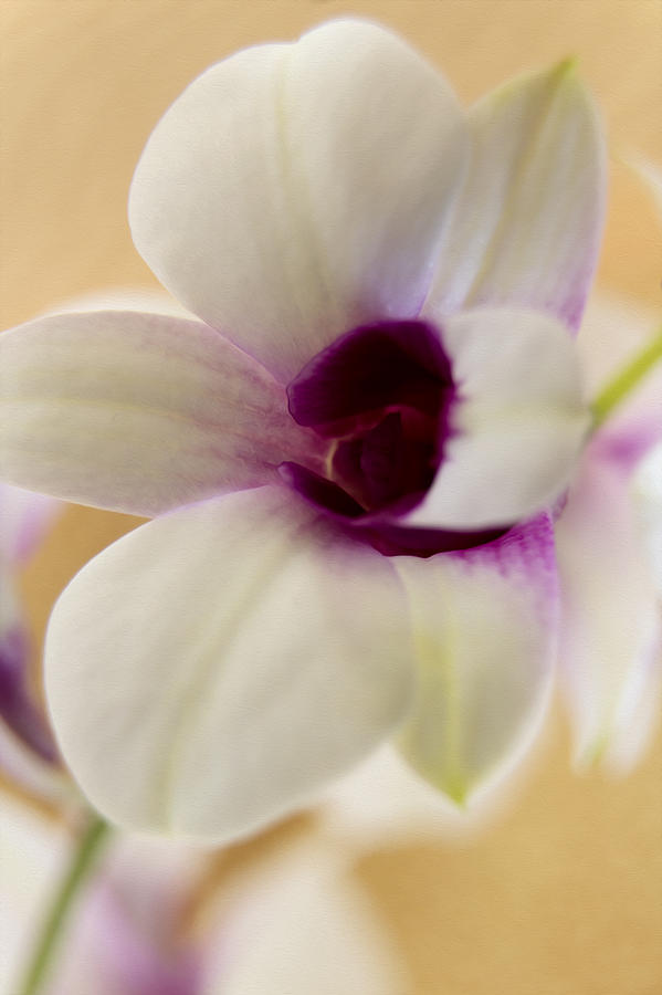 Flowers Photograph - Lovely Orchid by Dana Moyer