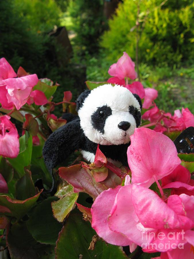 Baby Panda Photograph - Lovely Pink Flower by Ausra Huntington nee Paulauskaite