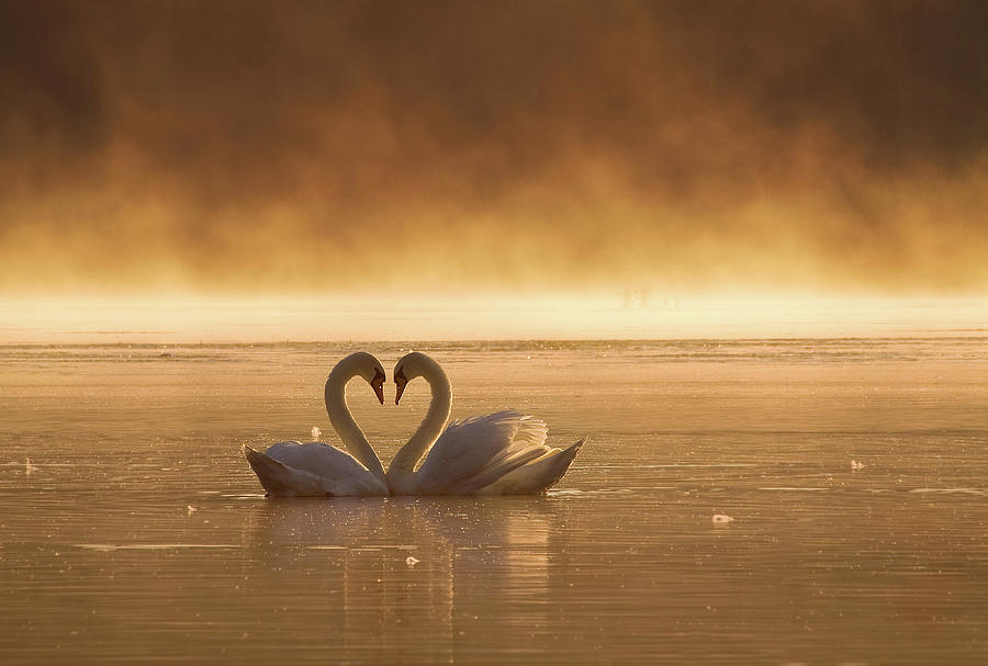 Love Photograph - Lovers by Fproject - Przemyslaw