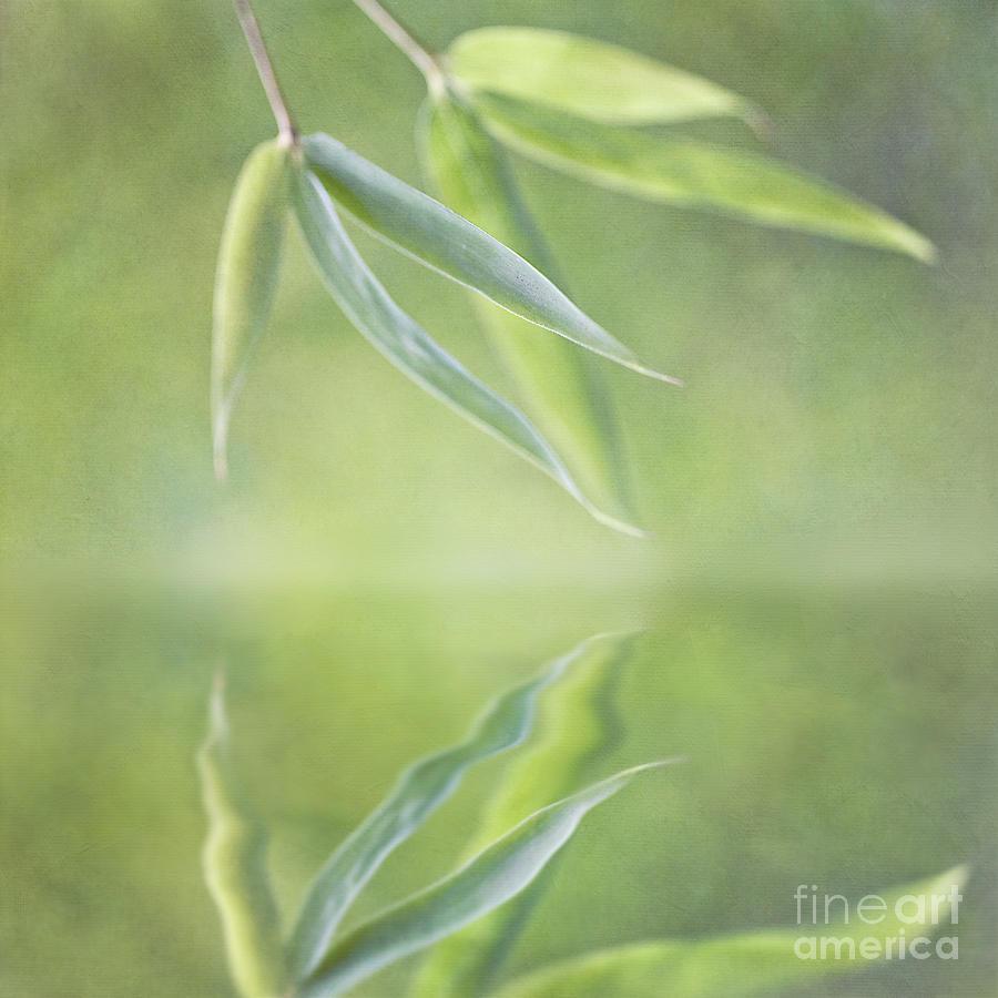 Loving Greens I Photograph