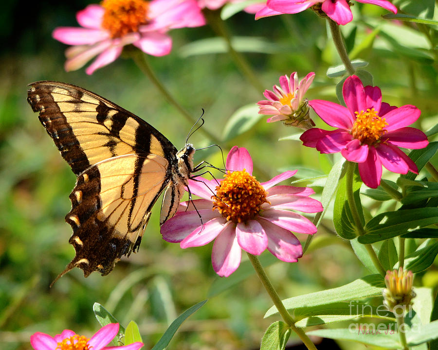 Butterfly Photograph - Loving Summer Garden by Nava Thompson