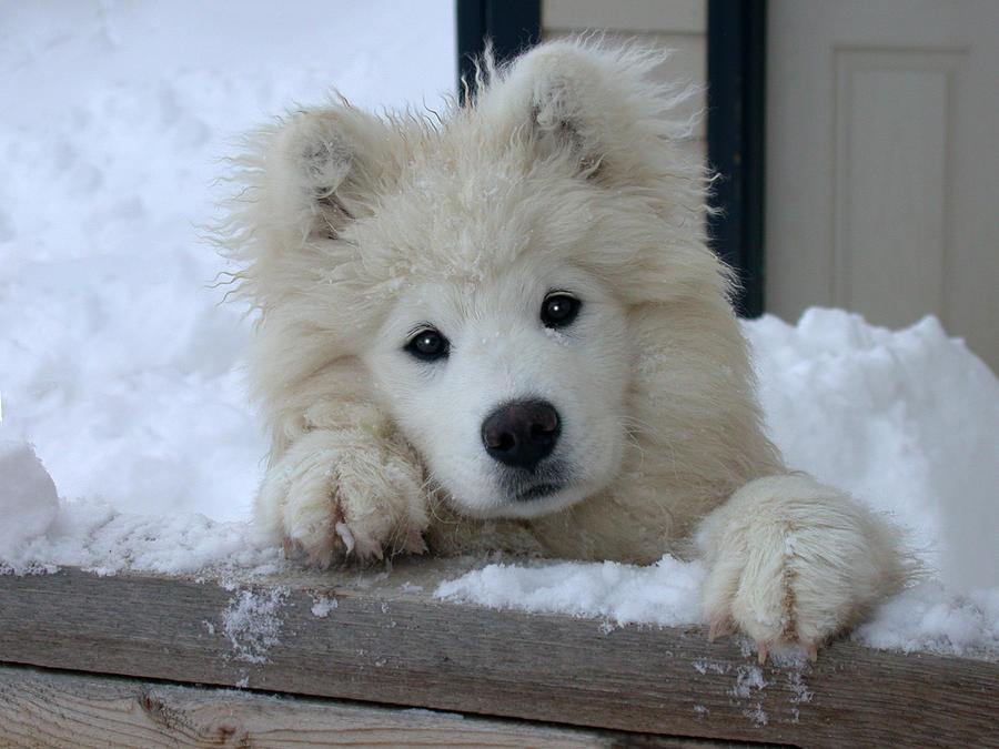 Loving The Snow Photograph by Shane Bechler