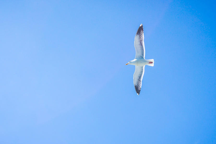 Low Angle View Of Bird Flying In Sky Photograph by Jesse Coleman / EyeEm