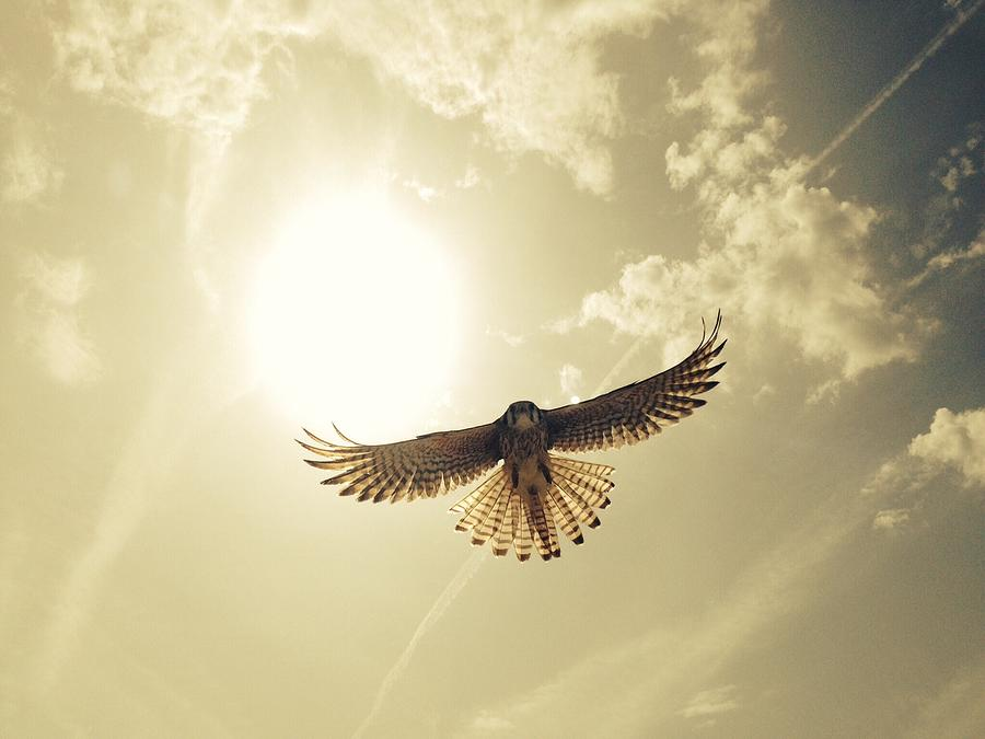 Low Angle View Of Eagle Flying Photograph by David Hernandez / Eyeem