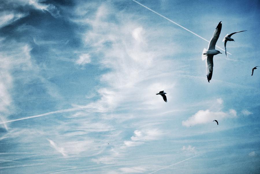 Low Angle View Of Seagulls Flying Photograph by Mark Mwamba / Eyeem