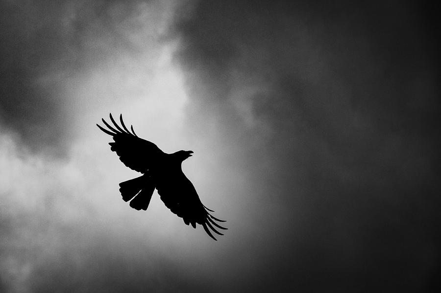 Low Angle View Of Silhouette Bird Flying Against Sky Photograph by Satoshi Hayashida / EyeEm