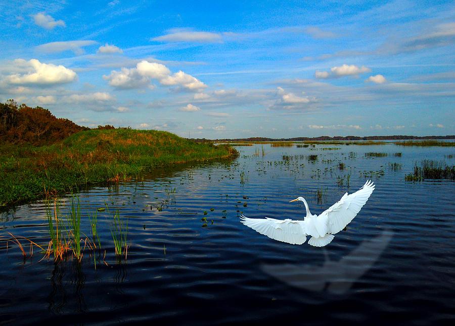 Wetlands Digital Art - Low Flying Bird by Fred Leavitt