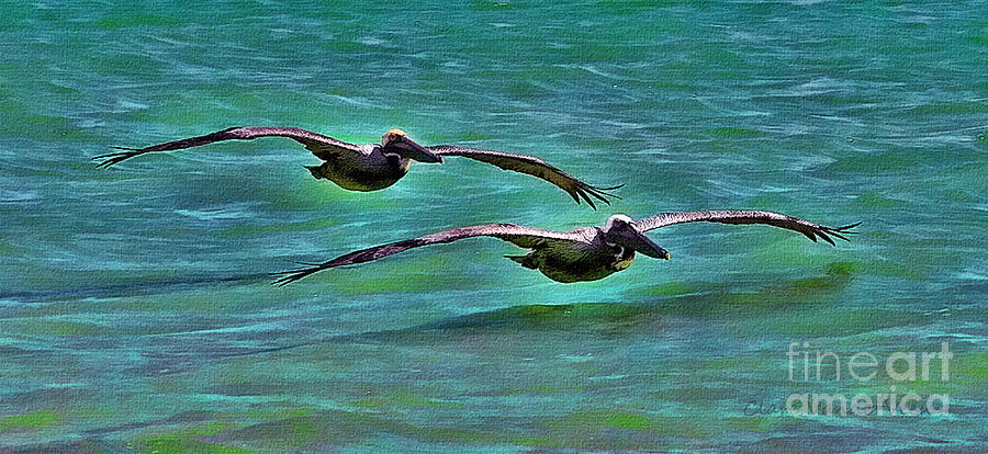 Pelicans Photograph - Low Riders by Clare VanderVeen
