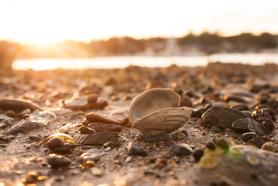 Clam Photograph - Low Tide 2 by Kristen Mohr