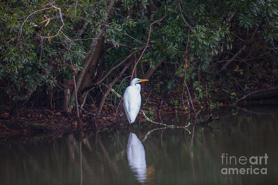 Lowcountry Pond Life Photograph