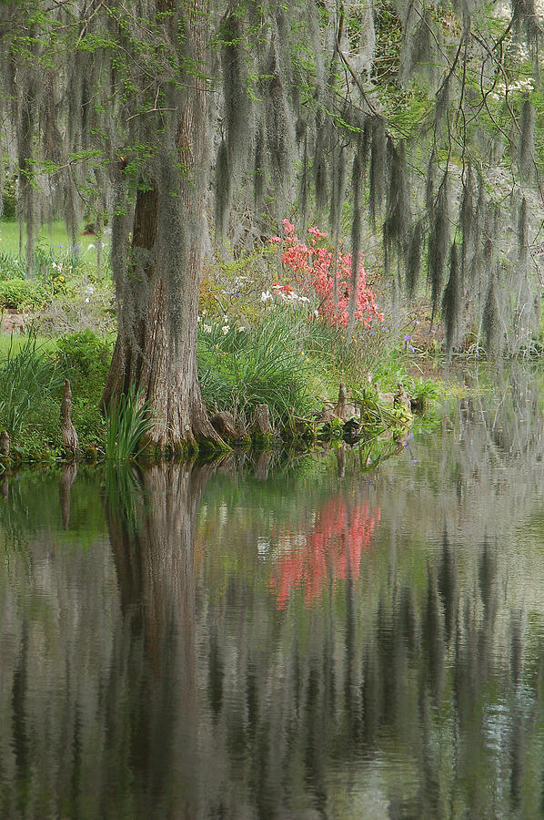 Lowcountry Series I Photograph By Suzanne Gaff