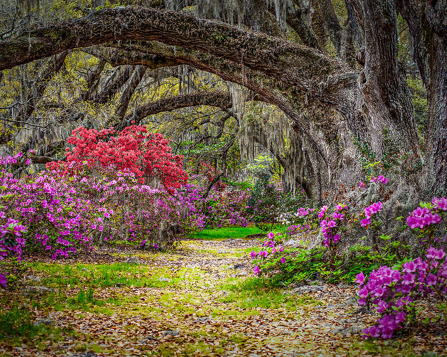 Charleston Photograph - Lowcountry Spring by Steve DuPree