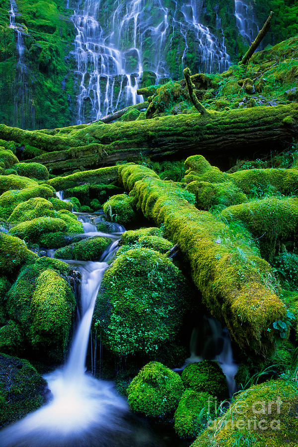 America Photograph - Lower Proxy Falls by Inge Johnsson