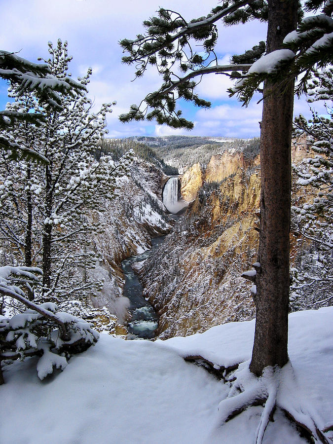 Waterfall Photograph - Lower Yellowstone Falls In October by Robert Woodward