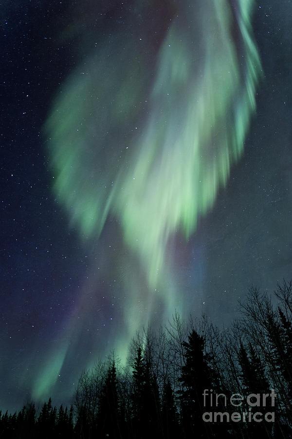 Aurora Borealis Photograph - Lucid Dream by Priska Wettstein