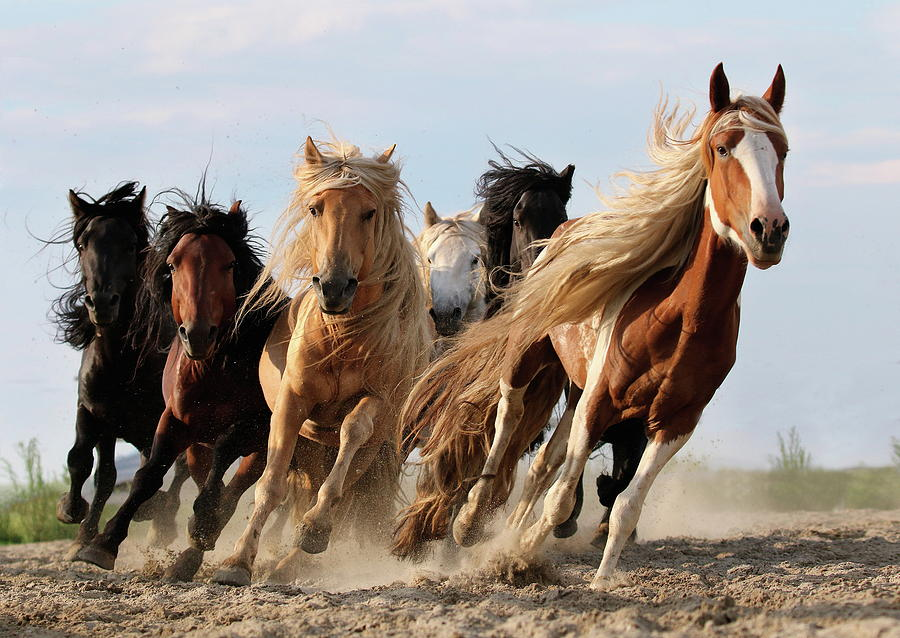 Horse Photograph - Lucky Six by Adam Wong