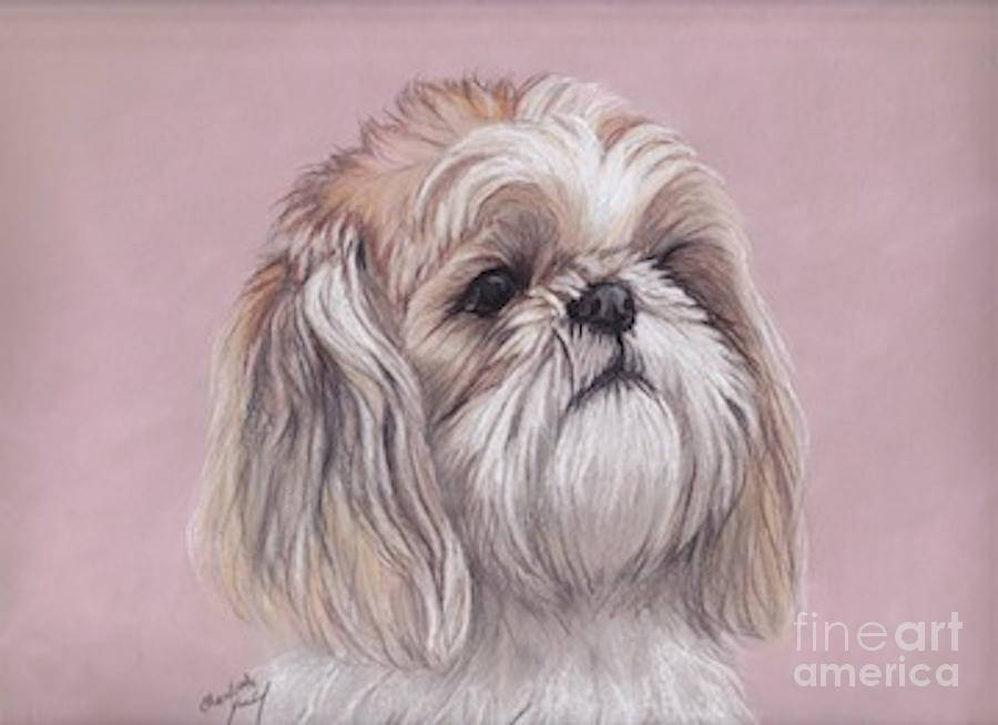 Dog Drawing - Lulu by Charlotte Yealey
