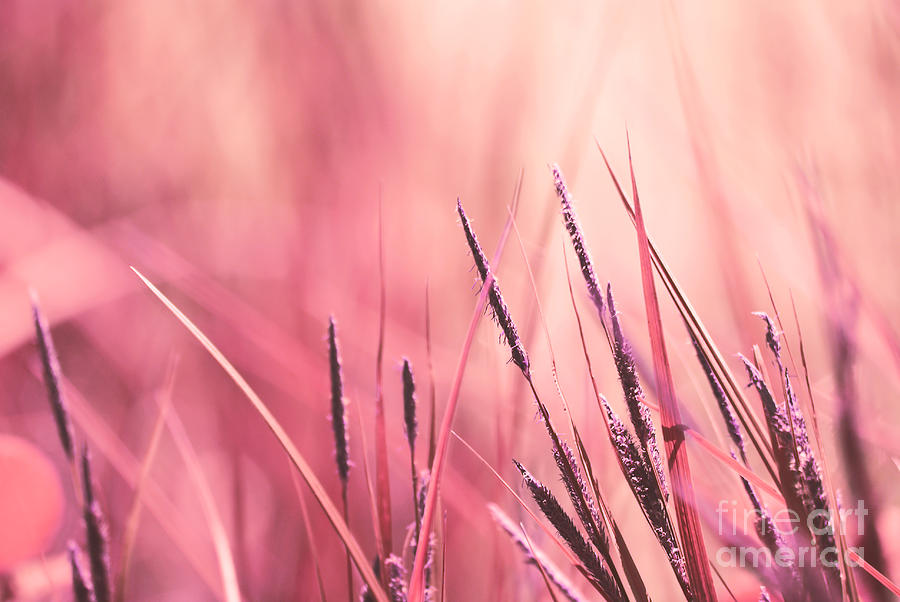 Pink Photograph - Luminis - S09c - Pink by Variance Collections