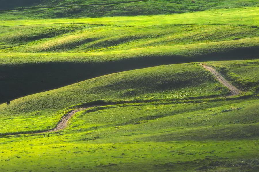 Green Photograph - Luminous Green  by Joan Herwig