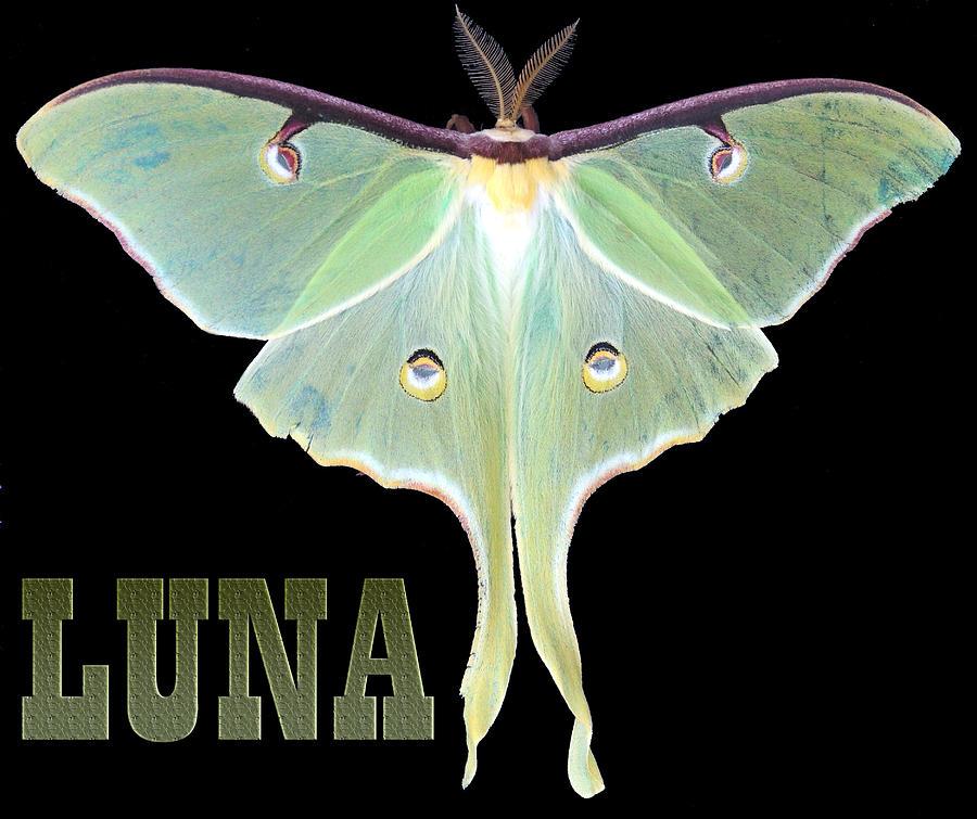 Moth Photograph - Luna 1 by Mim White