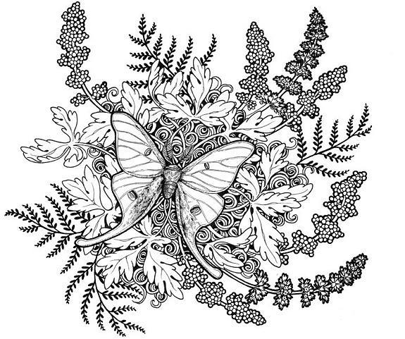 Art Line Work : Luna moth line work drawing by erin vaganos