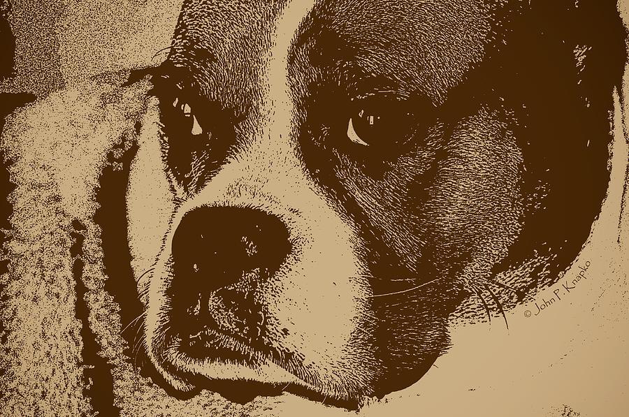Boxer Photograph - Luna The Boxer  by John Knapko