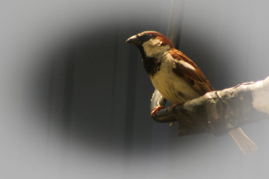 Bird Photograph - Lunch Buddy by Edward Hamilton