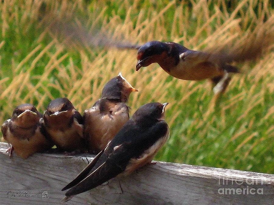 Mccombie Painting - Lunch Is Served To The Fourth Baby Barn Swallow by J McCombie